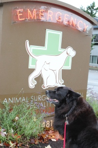Luna the WonderDog sits in front of the veterinary clinic sign looking regal.