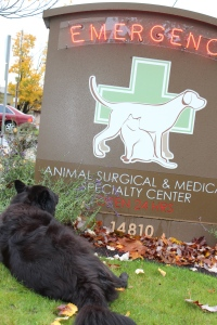 Luna the WonderDog waits outside the veterinary clinic.