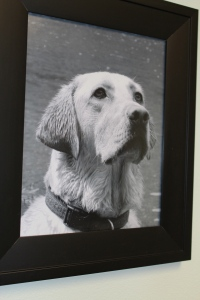 A lovely photo of a yellow lab dog hangs on the wall of the exam room.