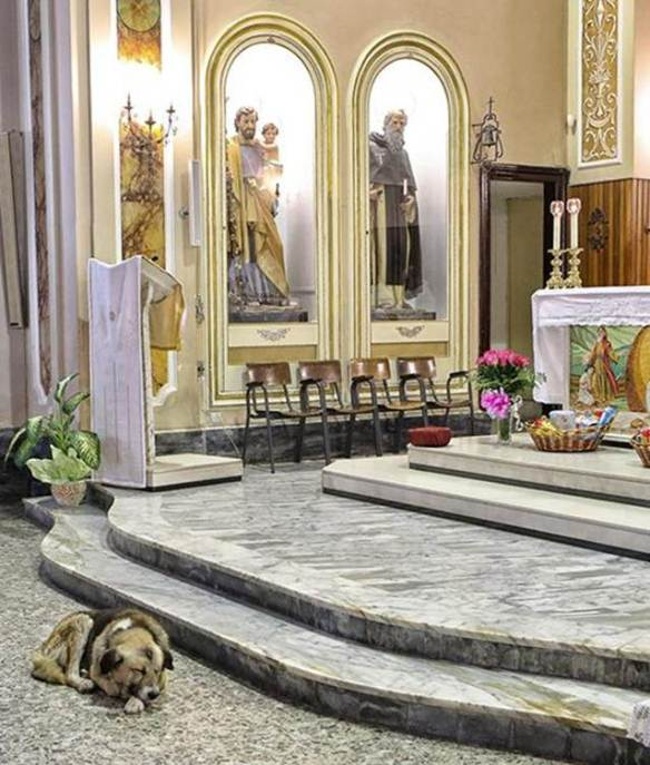 Tommy the dog -- a friend forever. From: http://www.pawnation.com/a/2013/01/16/italy-dog-frequent-churchgoer-since-owner-died/1