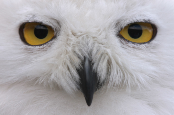 """To be alive is to be a living soul. An animal - and we are all animals - is an embodied soul."" The Lives of Animals by J.M. Coetzee  http://www.dpreview.com/galleries/8717673112/photos/2257401/owl-eyes"