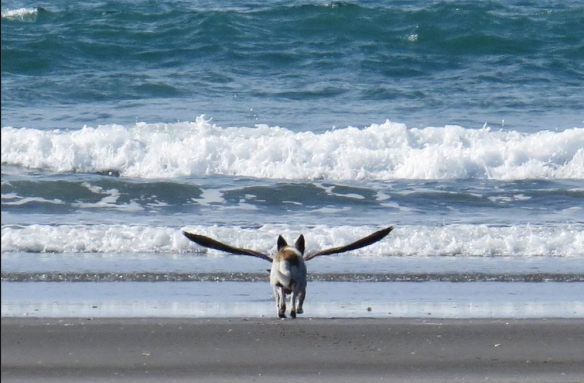 Imagine a time when dogs could fly…and maybe humans could ride just behind their wings…and they lived much much longer than they do now…and we understood each other's language...