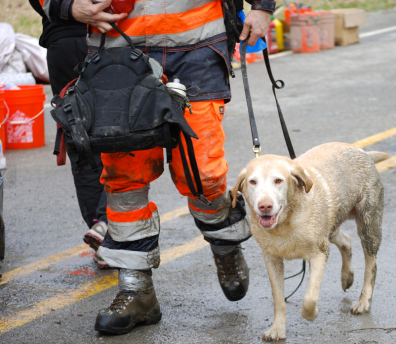 Rescue team at the Oso landslide. Trained sniffer dogs helped speed-up the search.