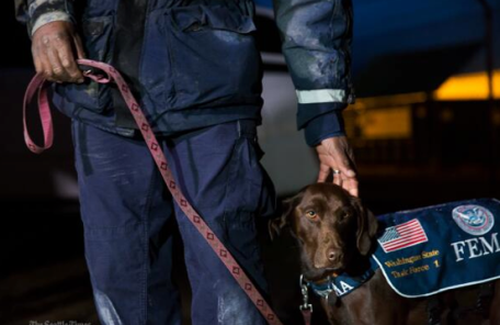 FEMA search dog onsite to help find victims of the Oso, WA Landslide.
